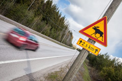Hirvivaaran merkki on syytä ottaa vakavasti ja ajaa erityisen tarkkaavaisesti.